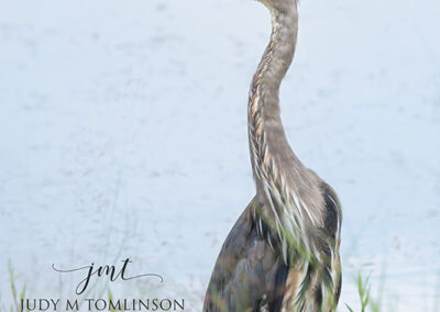 Blue-Heron-at-the-Pond-8x12-Plaque-Mount-$75
